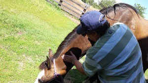 Marty performing equine massage therapy