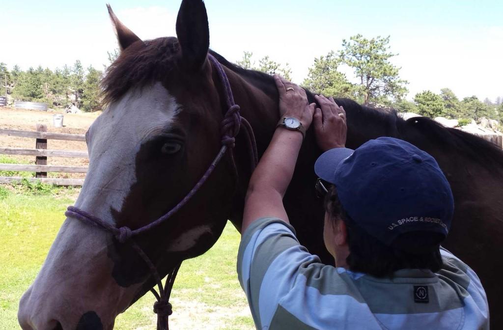 A photograph of Marty Clark massaging a chestnut horse