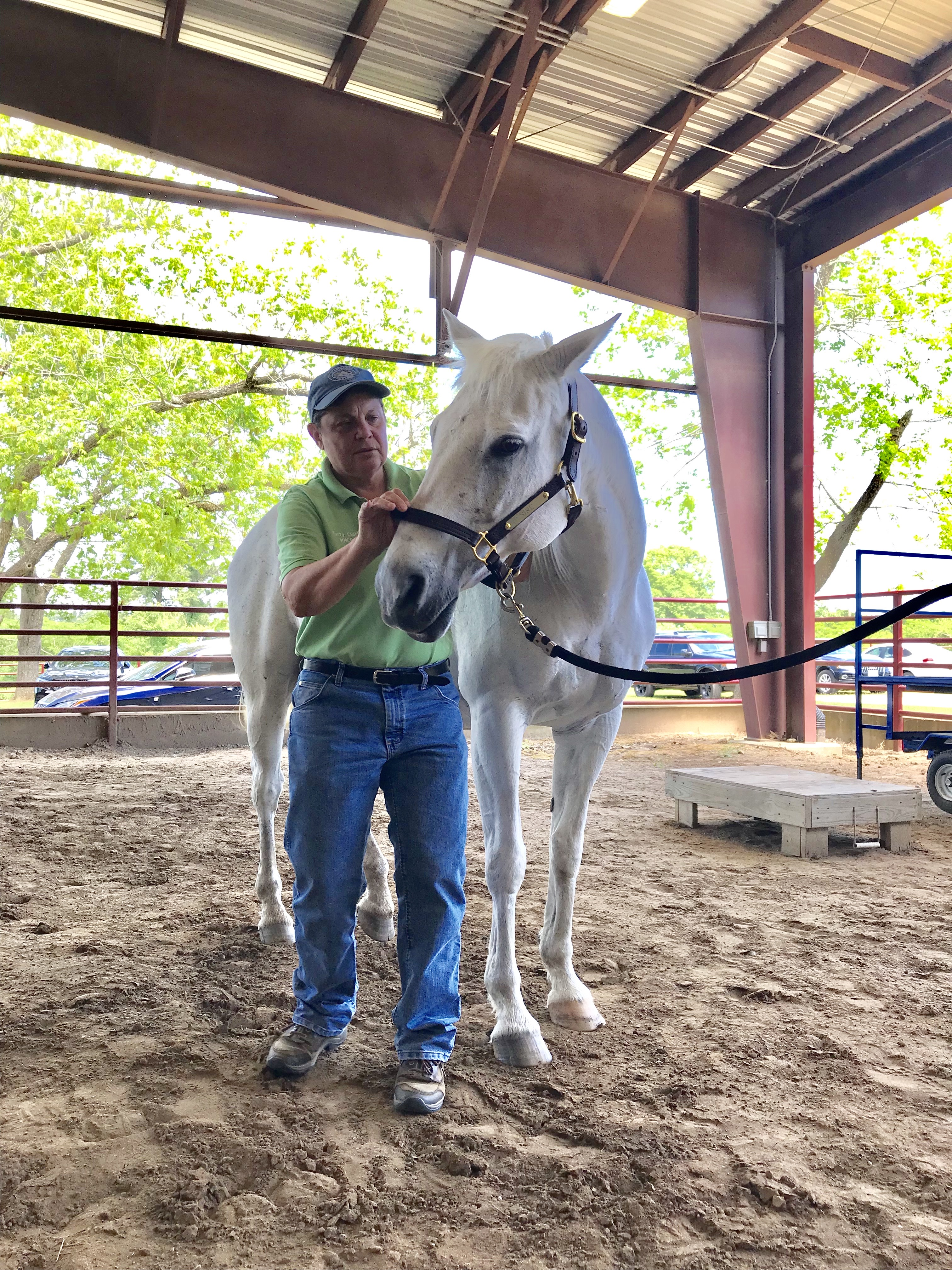 Marty performing horse massage therapy